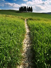 Orcia_003